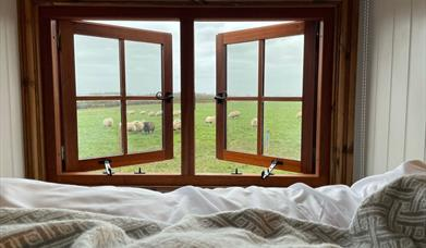 An image of the view from the bedroom window, overlooking the sheep field, at The Shepherds Retreat