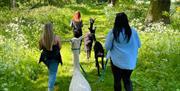 Ings Park Alpacas, North Cave, East Yorkshire