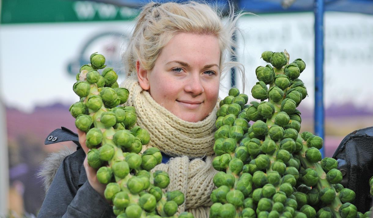 A woman holding 2 fresh brussel sprout stalks from W Clappison & Sons, near Beverley, East Yorkshire
