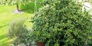 The garden area at Field View B&B in East Yorkshire.