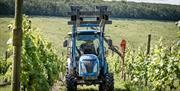 A tractor in the vineyards at Little Wold Vineyard, Brough, East Yorkshire.