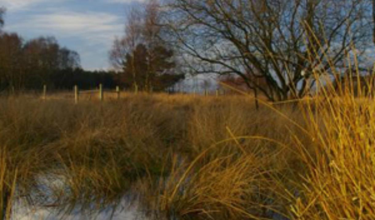 Grasses & pond at Allerthorpe Common, at Malton, East Yorkshire.