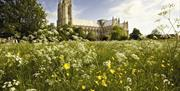 Looking through wild flowers towards Beverley Minster in East Yorkshire.