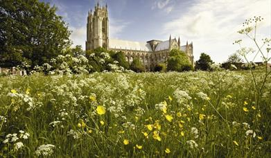 Looking through wild flowers towards Beverley Minster in East Yorkshire.