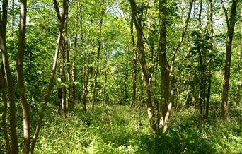 Woldgate Woods in Bridlington in East Yorkshire