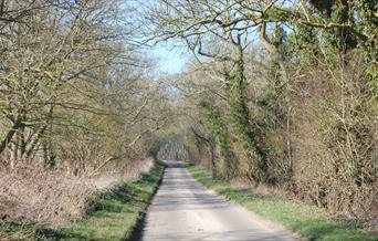 A sunny country lane in East Yorkshire
