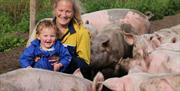 A lady holding a child in the middle of a group of pigs at Anna's Happy Trotters, in East Yorkshire