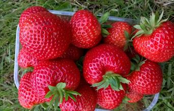 A punnet of strawberries from the Fruit Yard, East Yorkshire