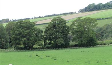 Trees near Thixendale, location for Hockney's paintings in East Yorkshire.