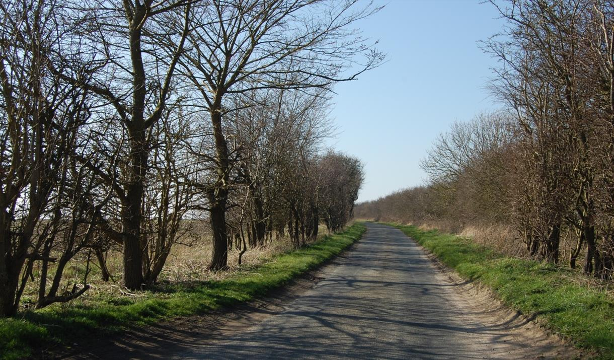 Location for the inspiration for Hockney's May Blossom on the Roman Road in East Yorkshire.