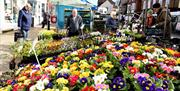 A plant stall at Pocklington market in East Yorkshire.
