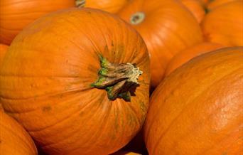 PYO pumpkins at Butt Farm