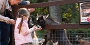 A family feeding goats at Sewerby Zoo, Sewerby Hall and Gardens near Bridlington, East Yorkshire
