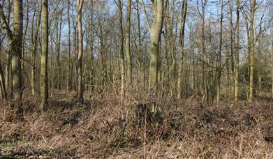 Totem site, Woldgate in East Yorkshire.