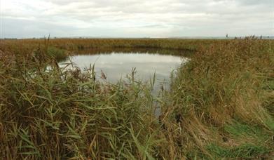 A pond at Blacktoft Sands Nature Reserve, East Yorkshire.