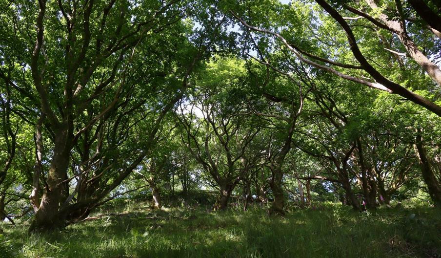 Woodlands at Berry Head Nature Reserve, Brixham, Devon