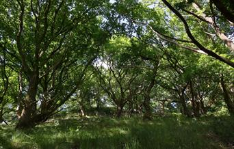 Woodlands at Berry Head Nature Reserve, Brixham, Devon