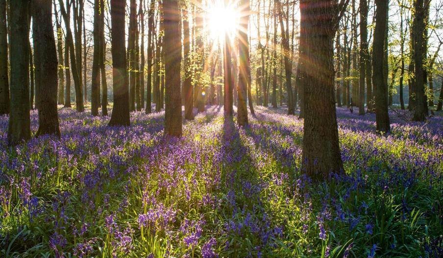 The Grove, Churston and Marridge Woods, Churston, Nr Brixham, Devon
