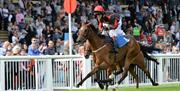 Horseracing at Newton Abbot Racecourse, Devon