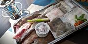 Number 7 Fish Bistro Torquay, Devon