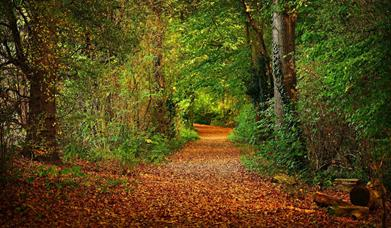 Occombe Valley Woods, Paignton, Devon