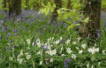 Primley Woods and Park, Paignton, Devon