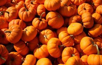 Apple and Pumpkin Festival, Cockington, Torquay