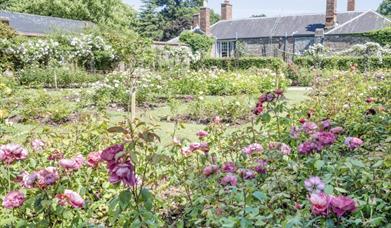 Tudor Rose Garden, Cockington, Torquay, Devon