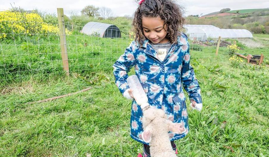 Meet Our Animals, Occombe Farm, Paignton, Devon