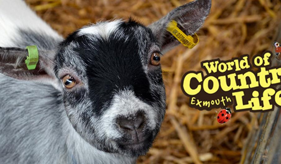 World of Country Life, Exmouth, Devon