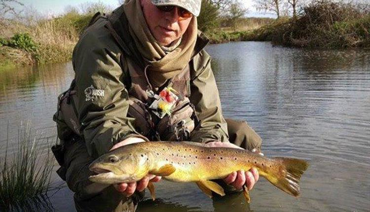 Trout at Thornwood Springs Fishery, Epping.