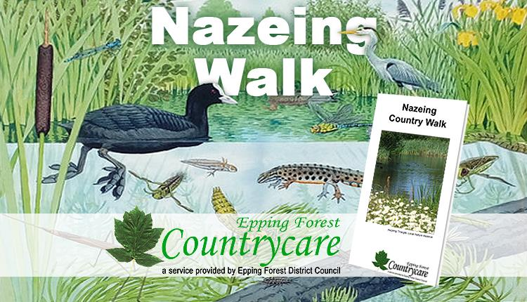 Wildlife at the Nazeing Triangle on the Nazeing country walk