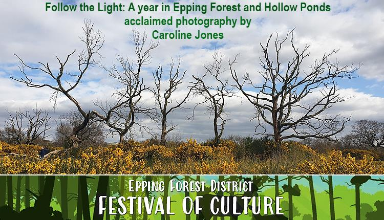 Photograph by Caroline Jones from her book Follow the Light: A year in Epping Forest and Hollow Ponds'
