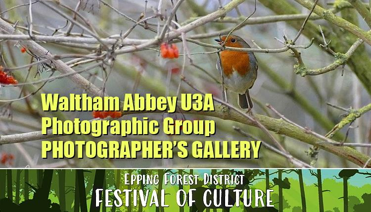 Waltham Abbey U3A Photograhpic Group - Photographer's Gallery