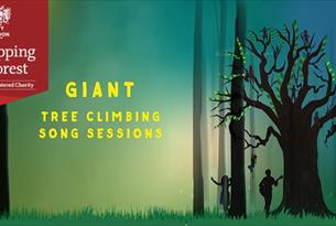 Giant Tree Climbing Song Sessions