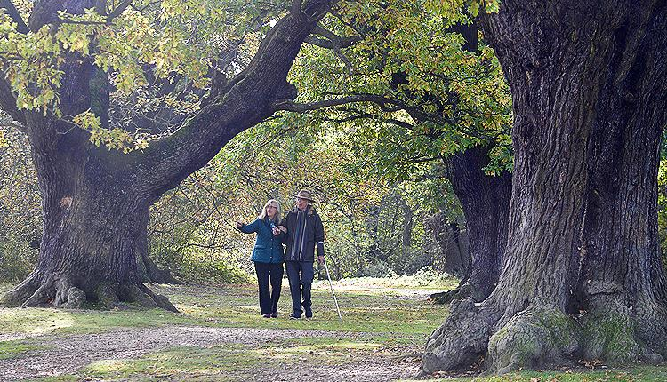 People walking amongst the ancient oaks at Barn Hoppitt, Chingford, Epping Forest