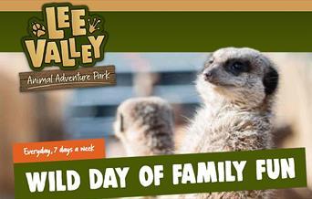 Meerkats at Lee Valley Adventure Park
