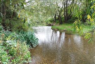 The River Roding, the heart of the Roding Valley Nature Reserve