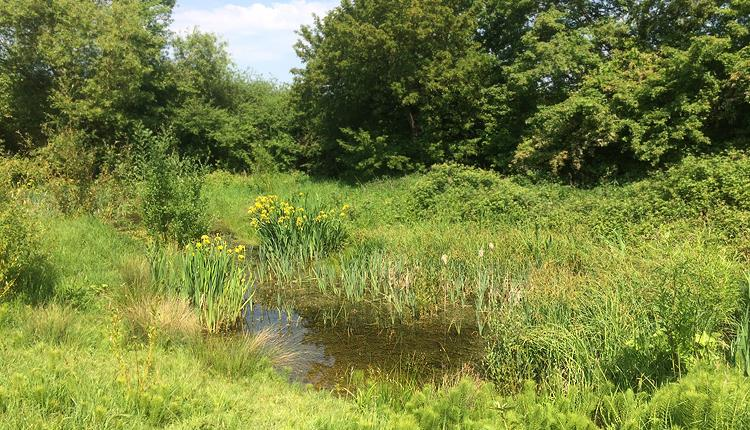 The pond at Swaines Green Wildlife Site, Epping.