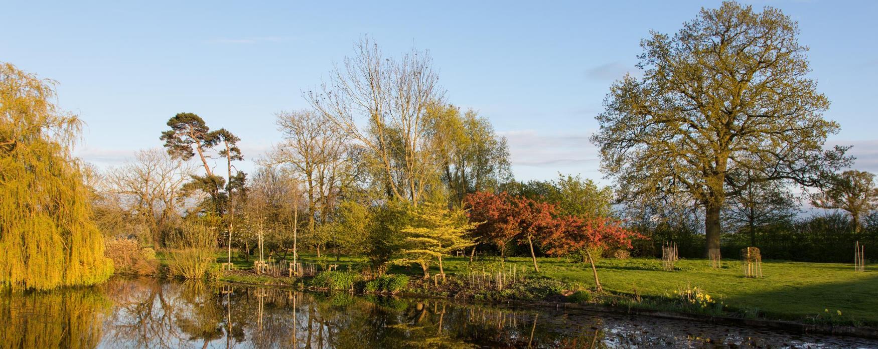 Bardfield Vineyard autumn trees