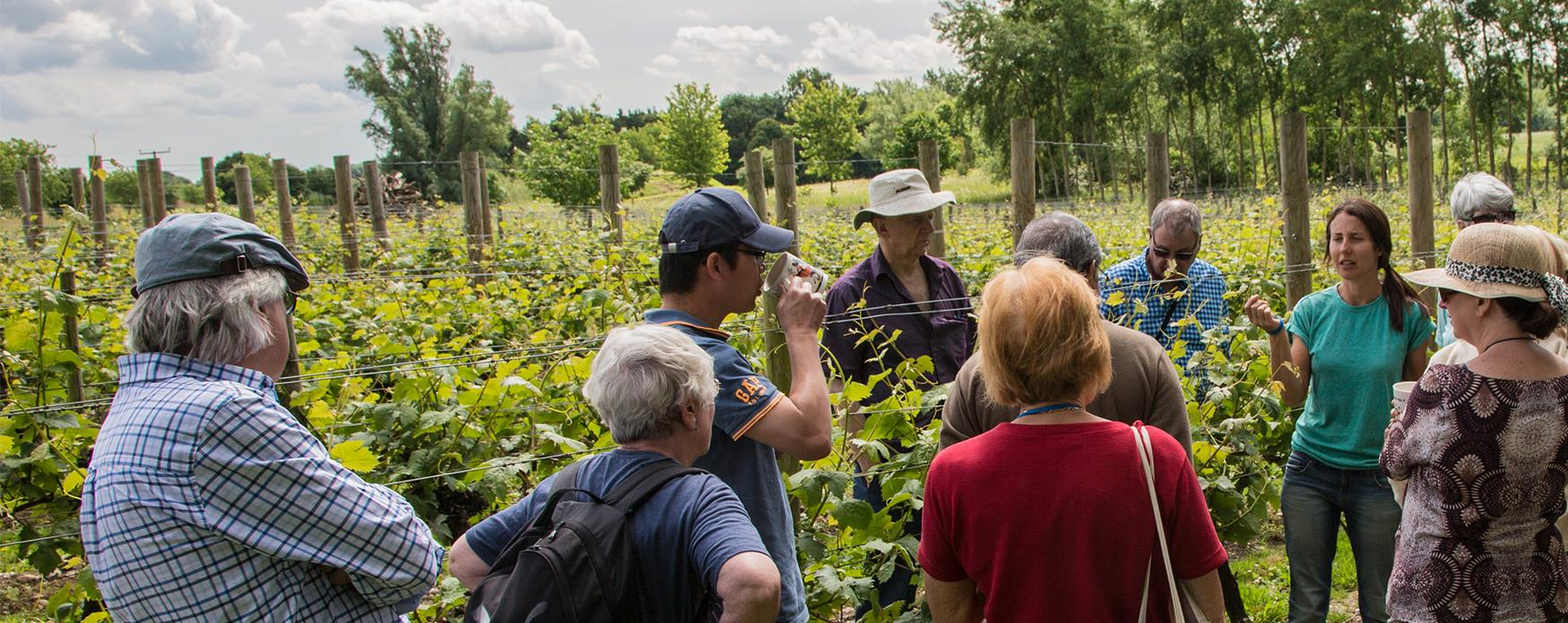 A group standing among vines at Bardfield Vineyard