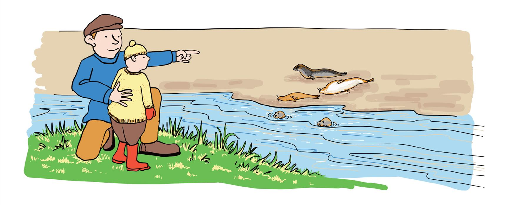 Illustration of Seal watching activity