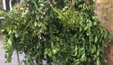 Greenery Hanging on stall