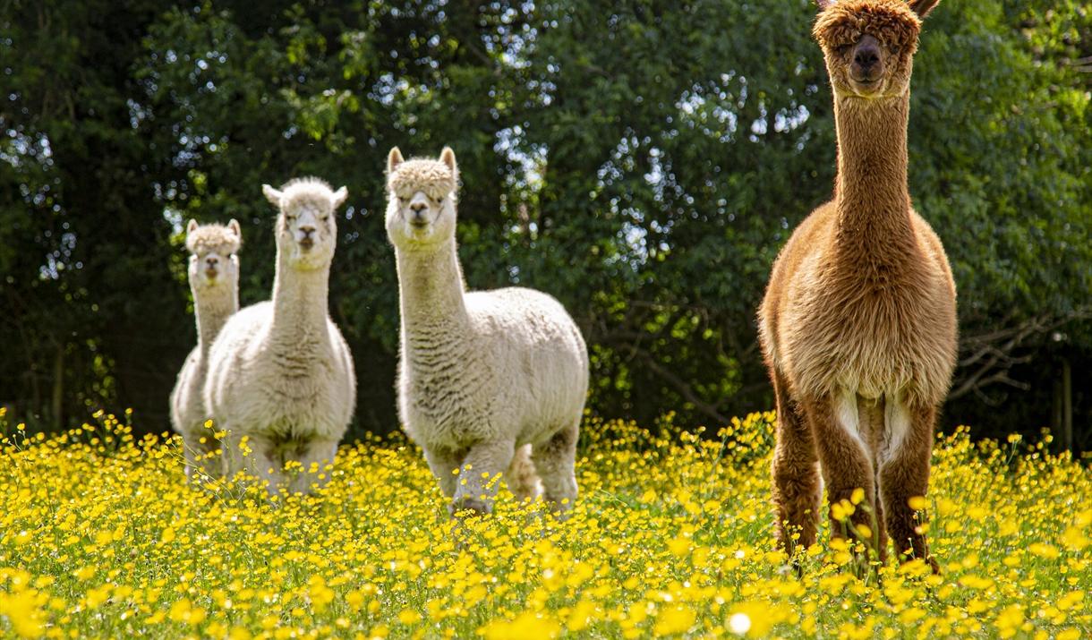 Hopefield Animal Sanctuary