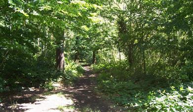 Belfairs Woods