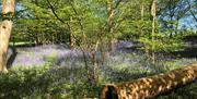 Hanningfield Waterside Park