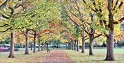 Central Park, Chelmsford