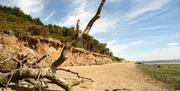 Cudmore Grove Beach tree branch
