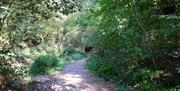 Danbury Park shady path