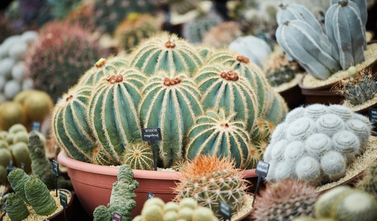 Cactus & Succulent Weekend at RHS Hyde Hall